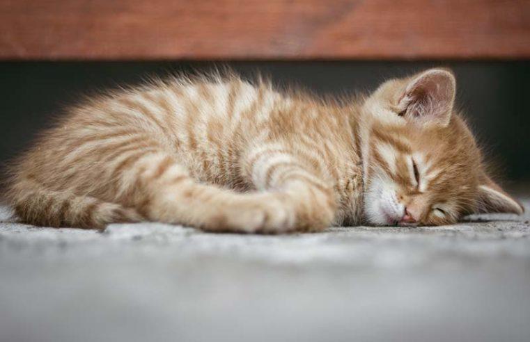 Сплю перед месячными что делать